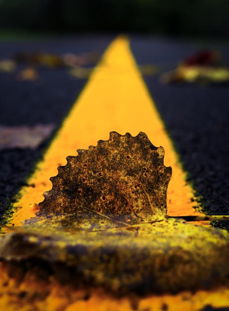 Autumn Roads by Luke Shepherd