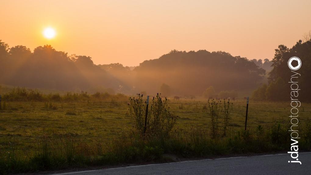 Good morning, Cows! by Justin Davis