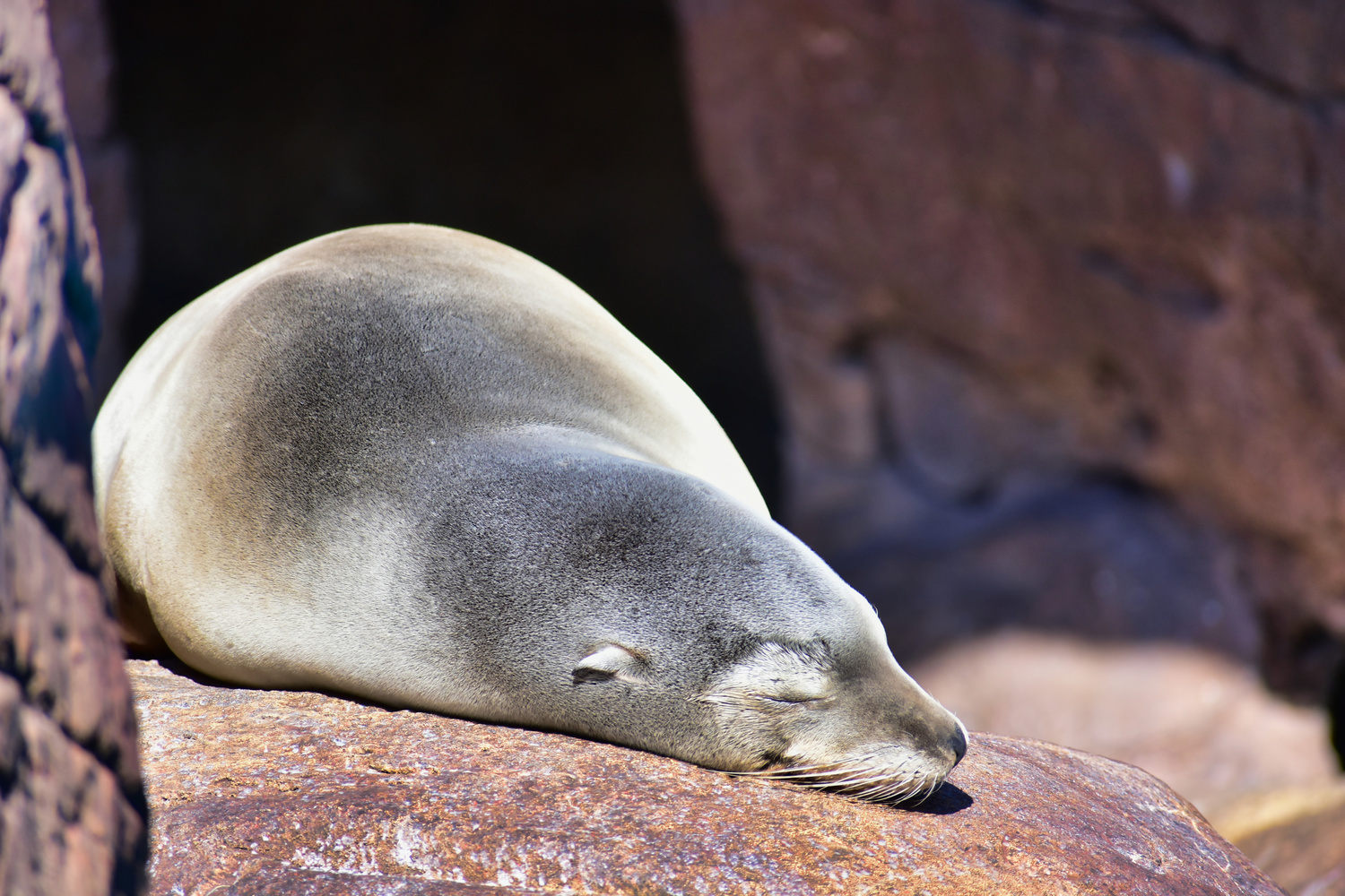 Sleeping Seal by Matthew Lacy