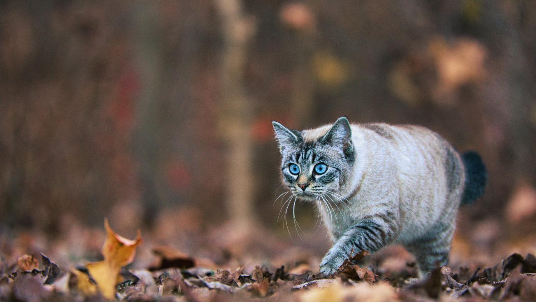 Cat by Matthew Lacy