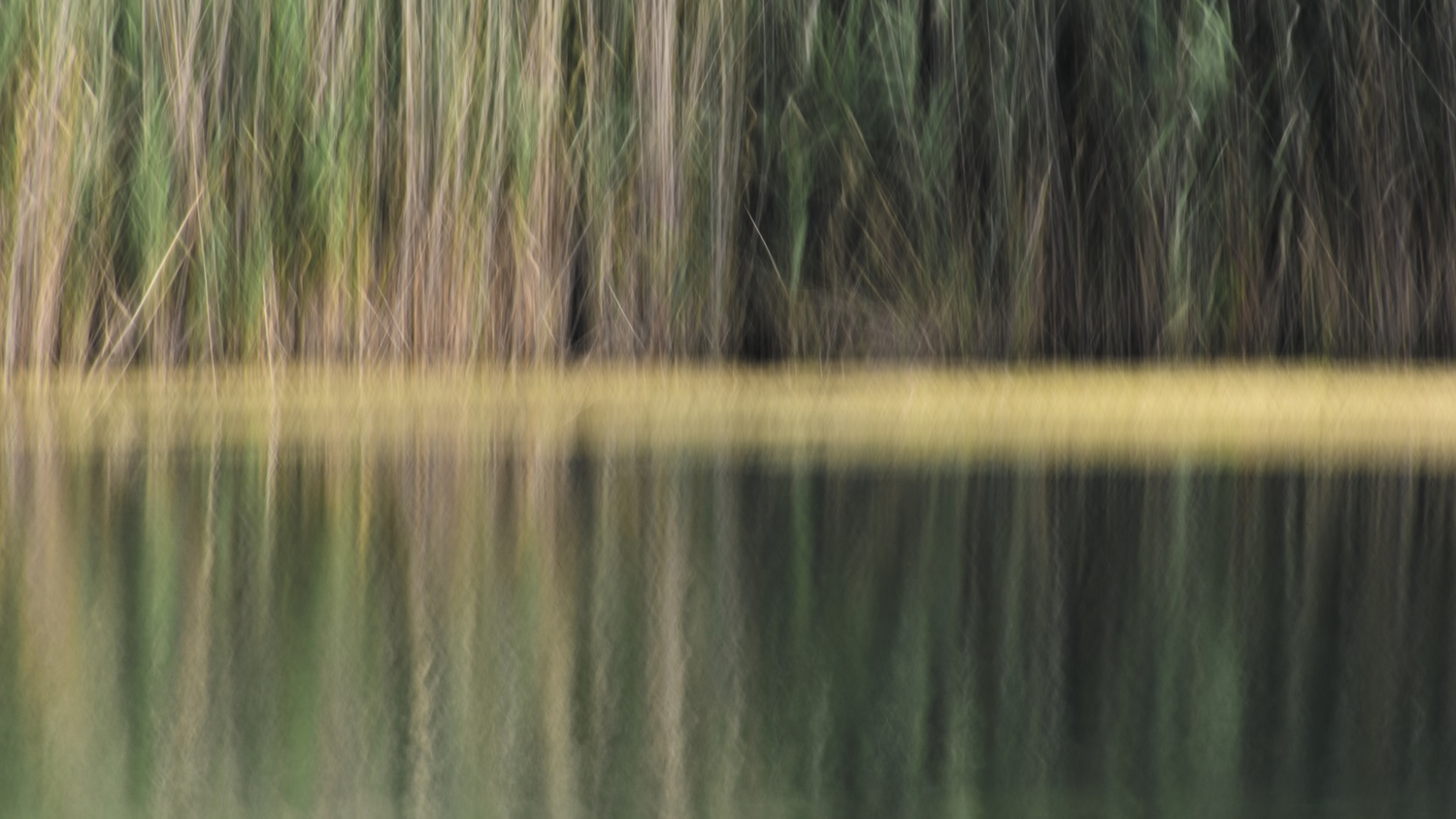 Reeds on the Pond by Matthew Lacy