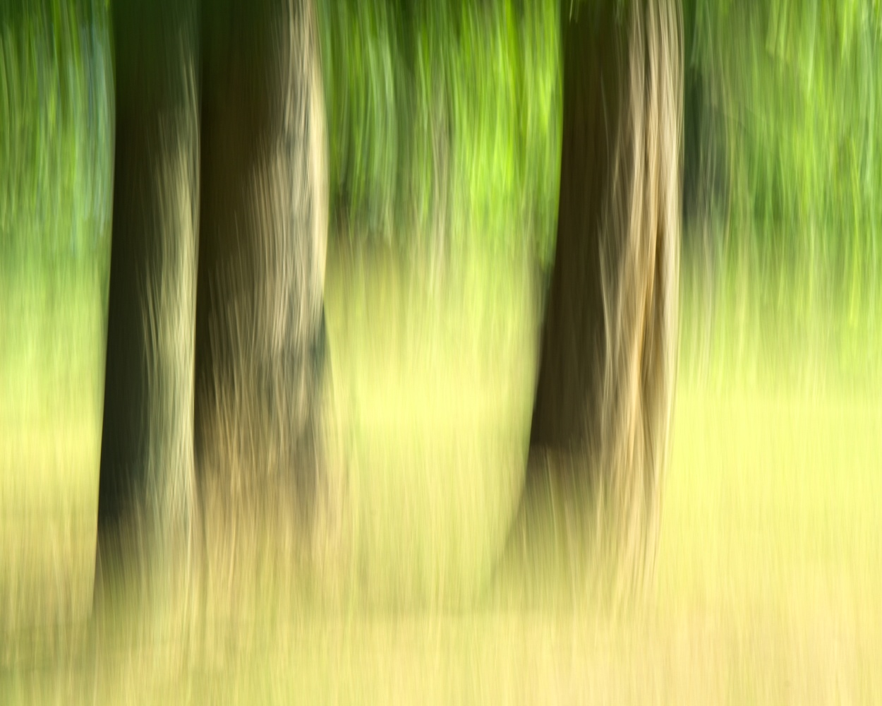 Woods ICM by Matthew Lacy