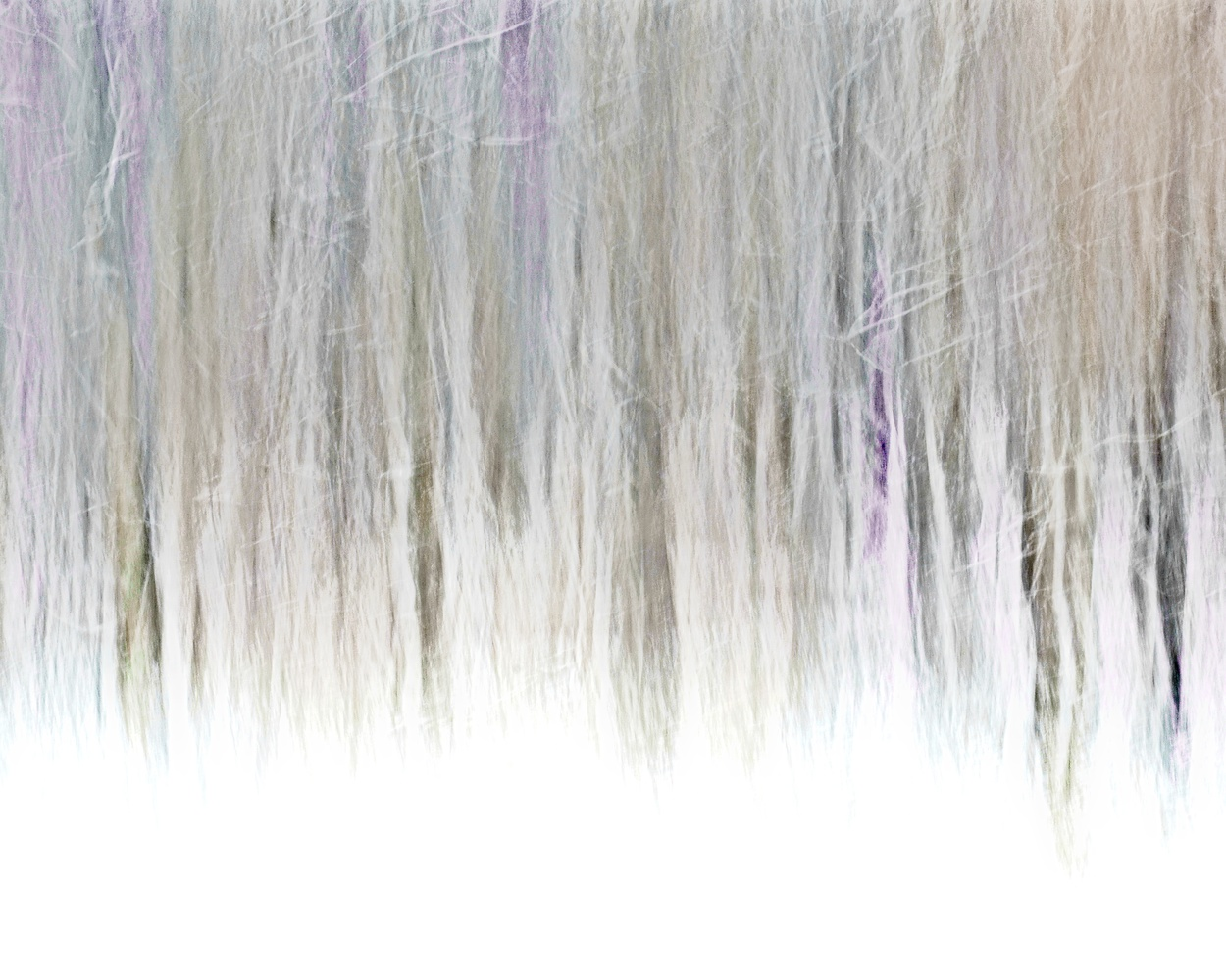 First Snow ICM by Matthew Lacy
