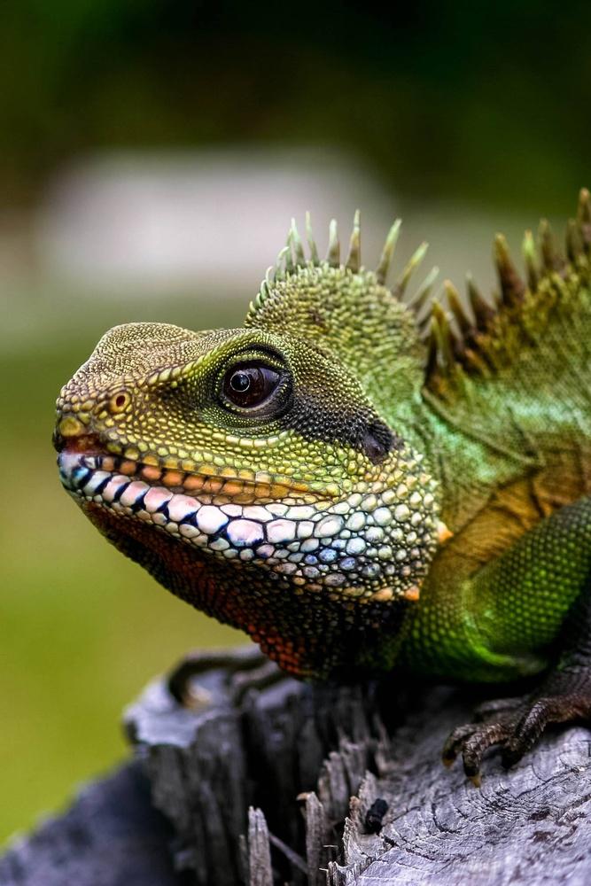 Dragons by Brittney Fulton