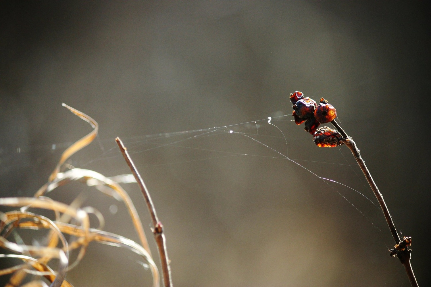 Weaving a Tangled Web by Brittney Fulton