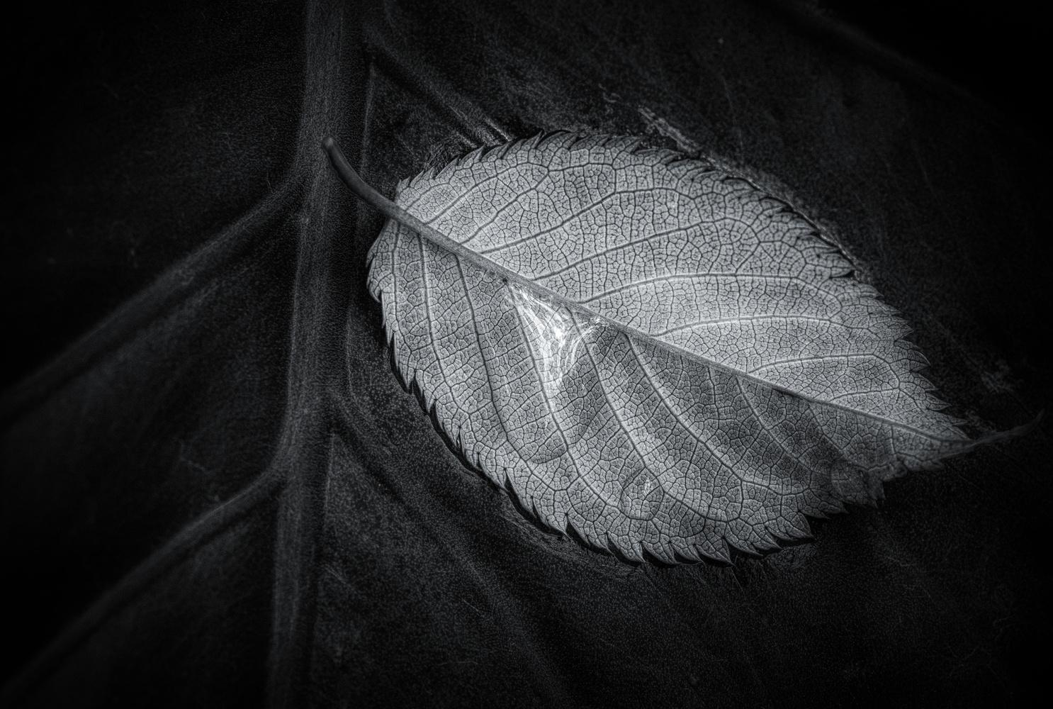 Leaf on Leaf by John Ellingson