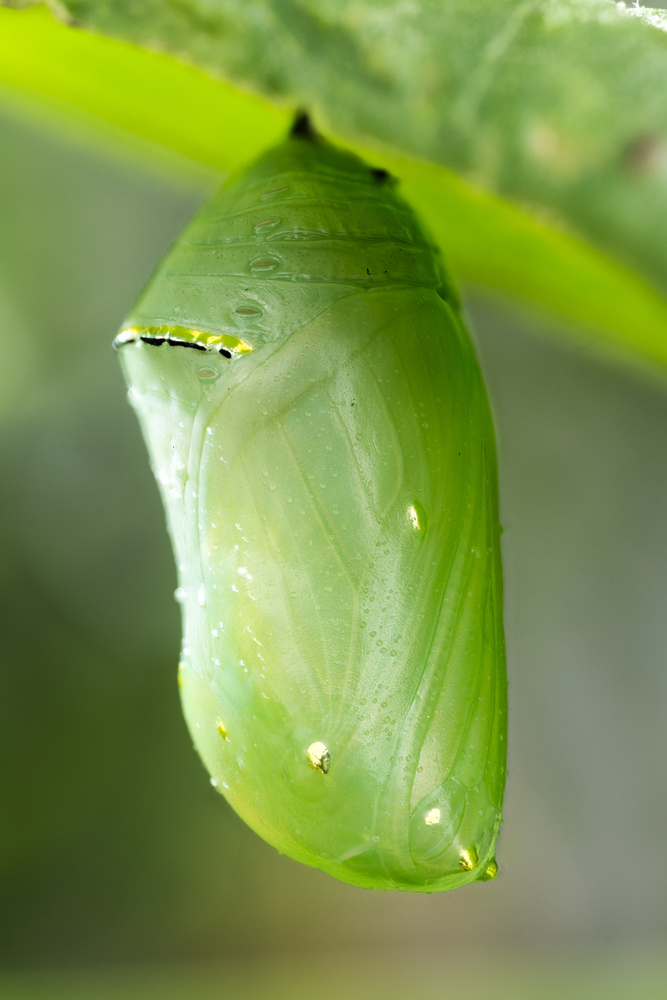 Fresh Chrysalis by Alberto Alanis