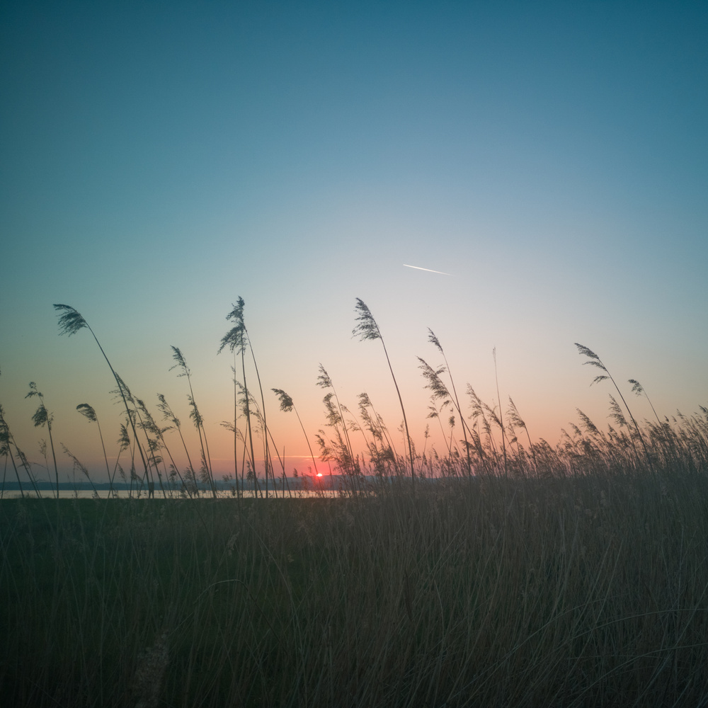 Sunset behind the reeds by Melanie Knight