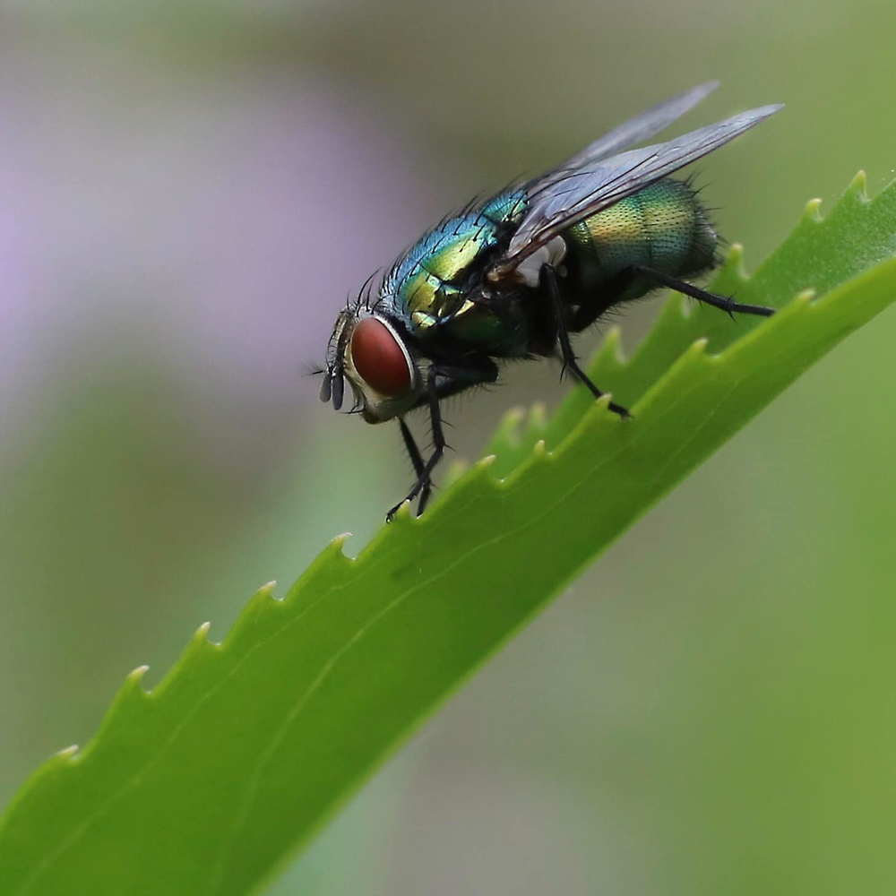 house fly by Cynthia Johnson
