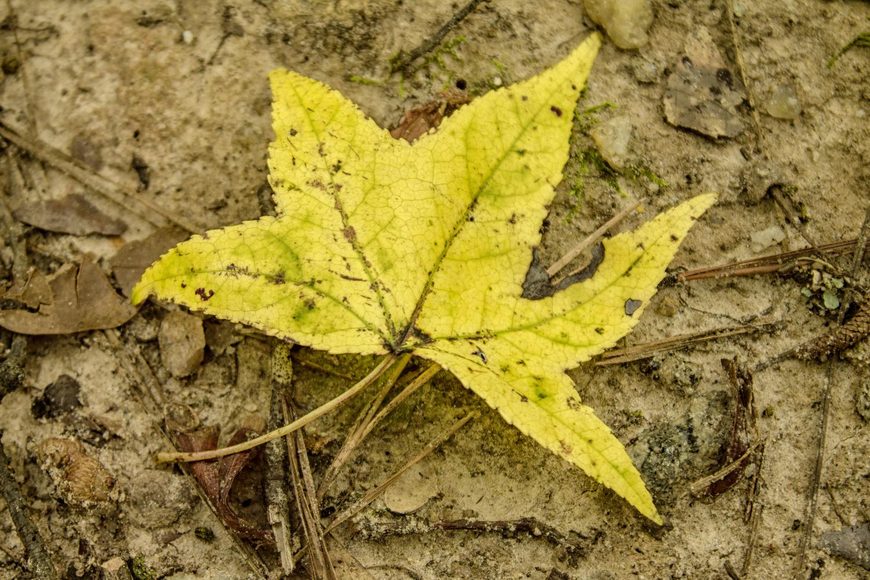 The Yellow Fall Leaf by Thomas Vasas