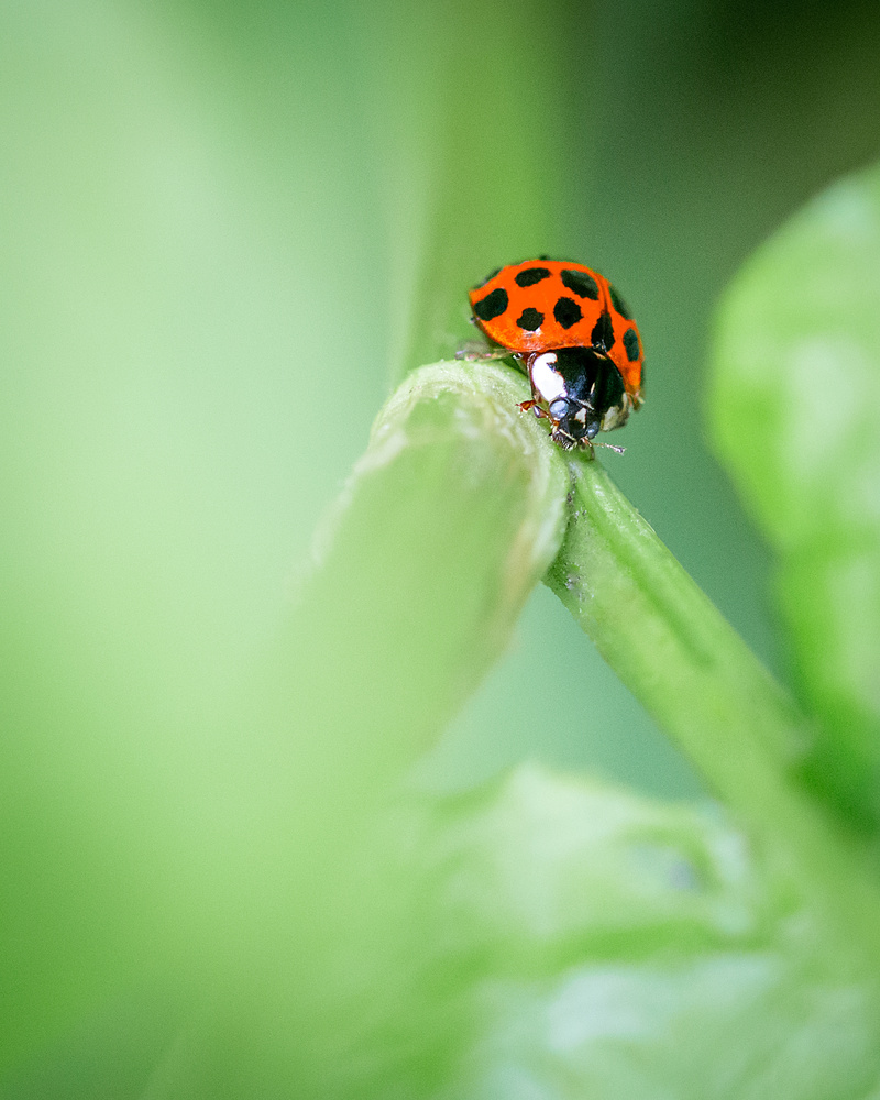 Ladybird by Stephen Norman