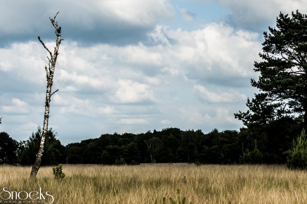 live tree vs dead tree by Matthieu Snoeks