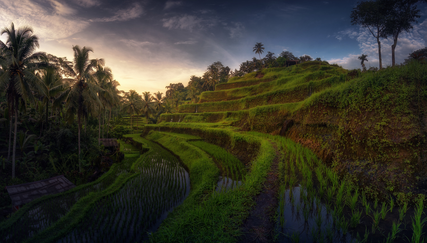 Tegallalan rice terrace by jabi sanz