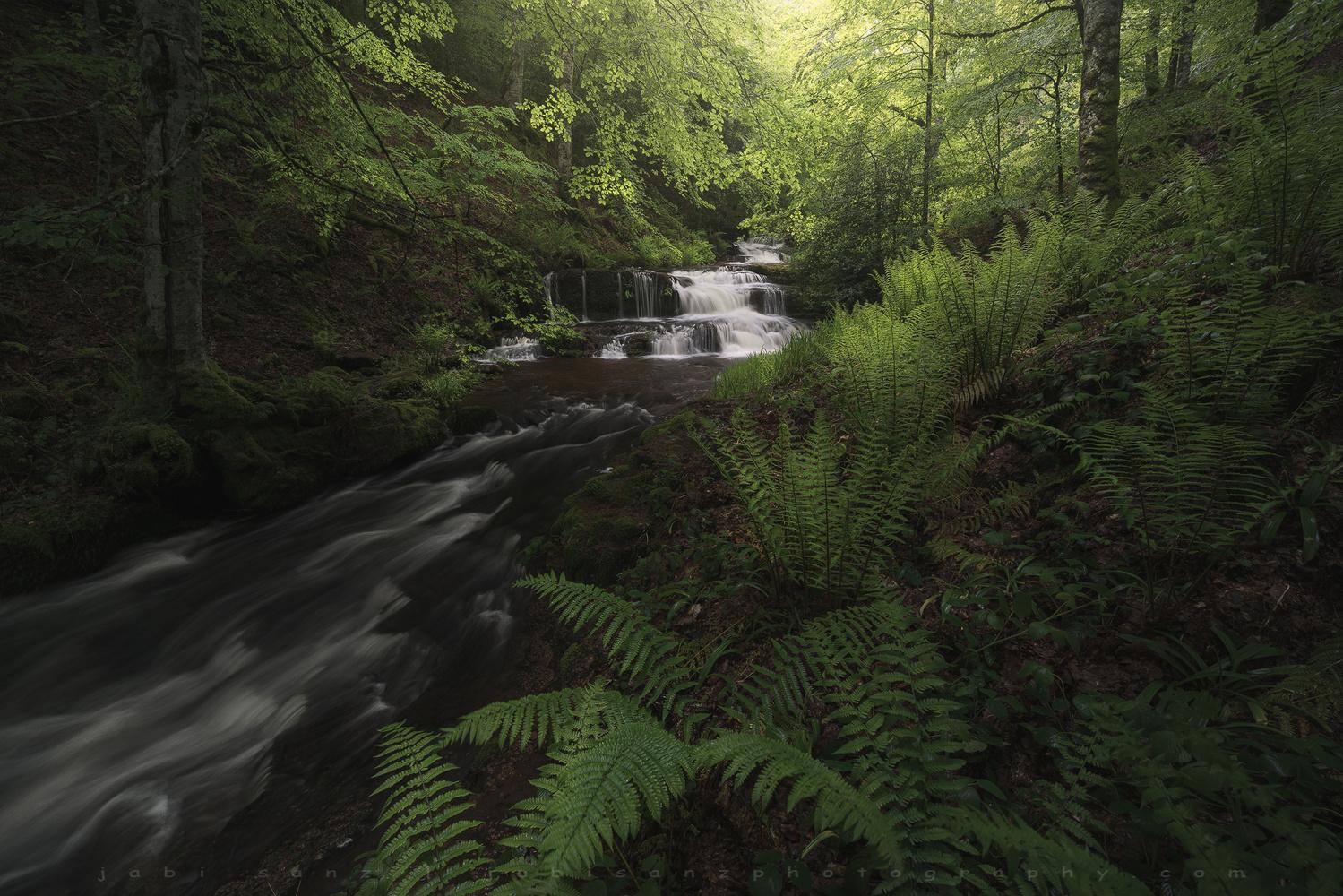 Rain forest by jabi sanz