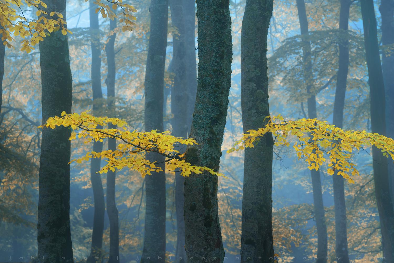 Light of life by jabi sanz