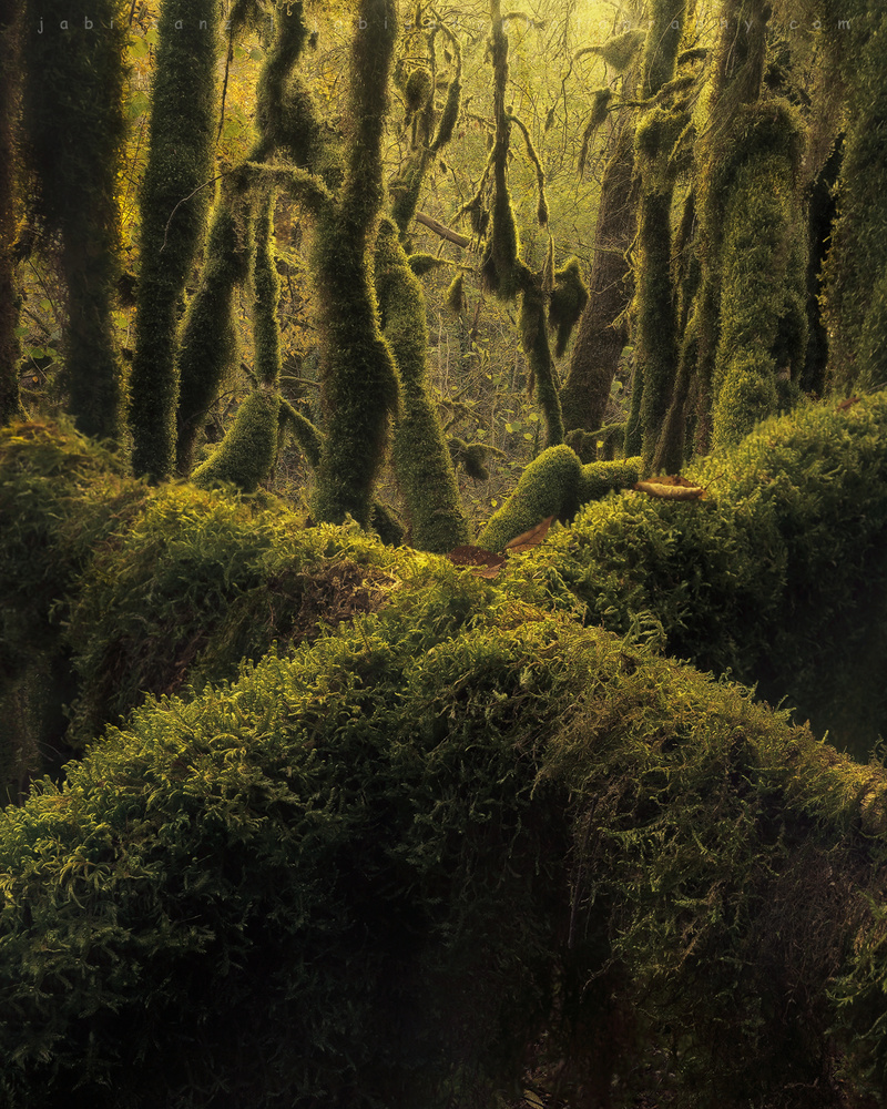 The Flourishing Light by jabi sanz
