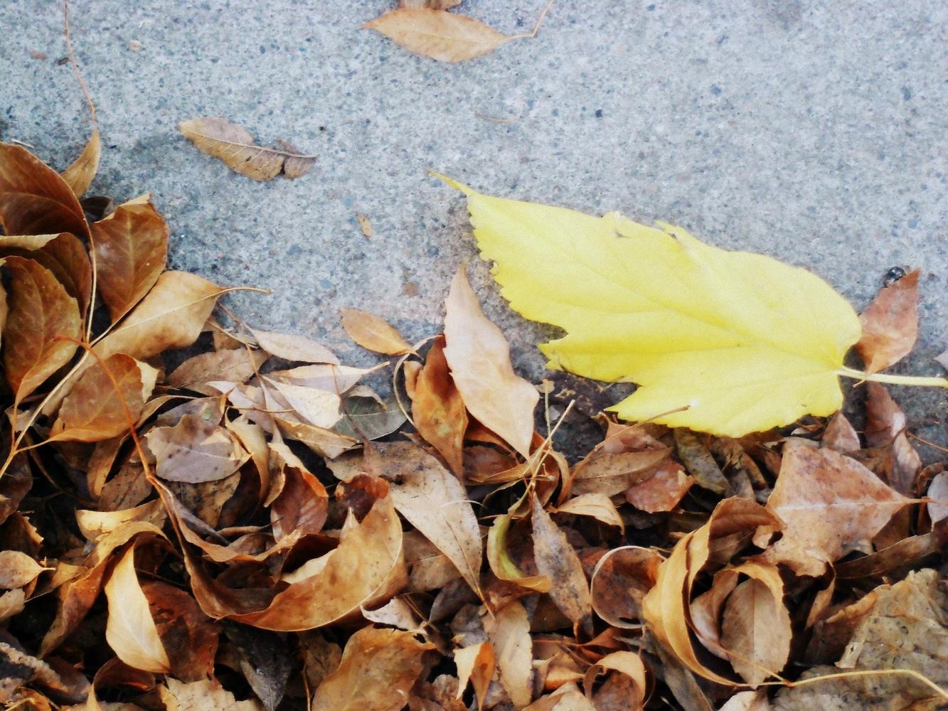 Leaves by Carrie walker