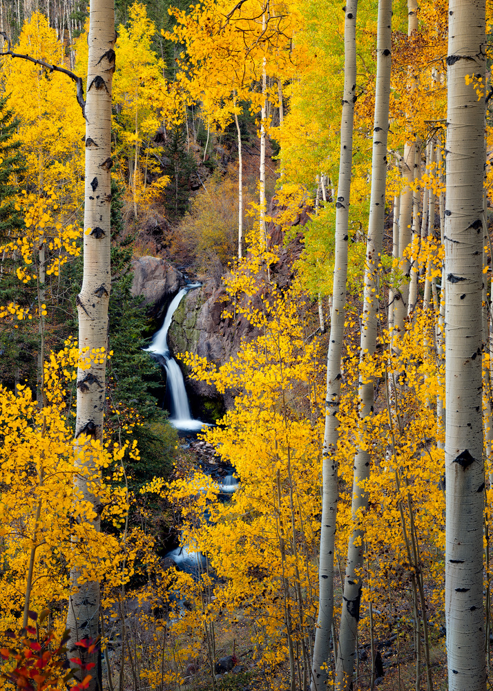 Fall falls! by John Daniel