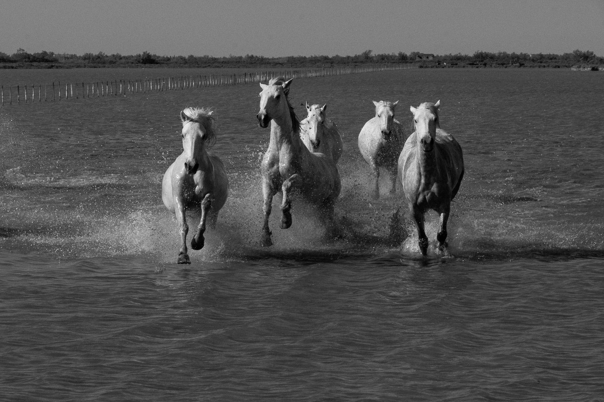 Wild horses by Suvir Mirchandani