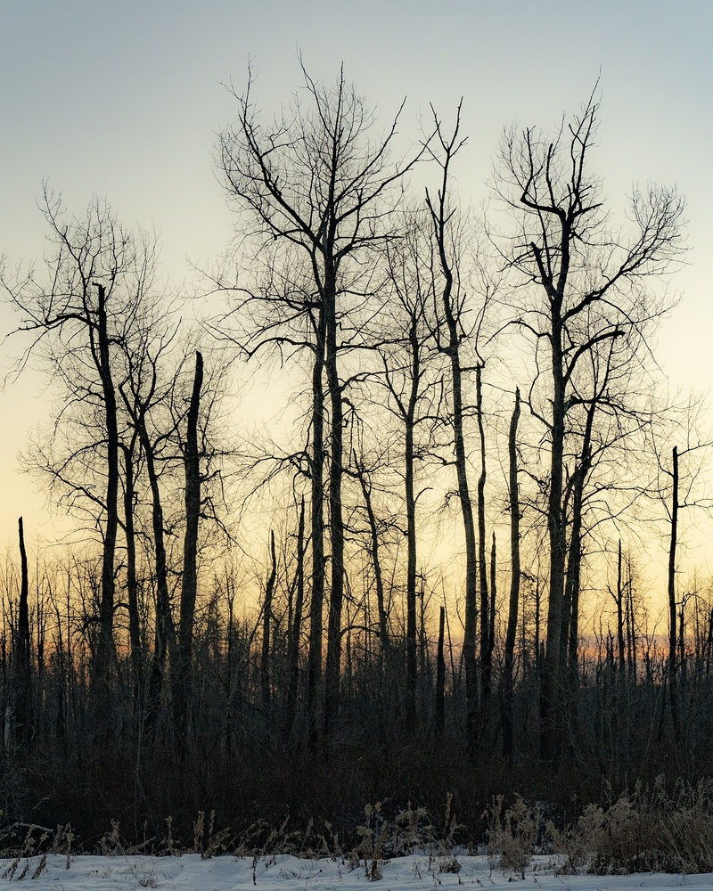 Silouhette trees before light by Taylor Hawkins