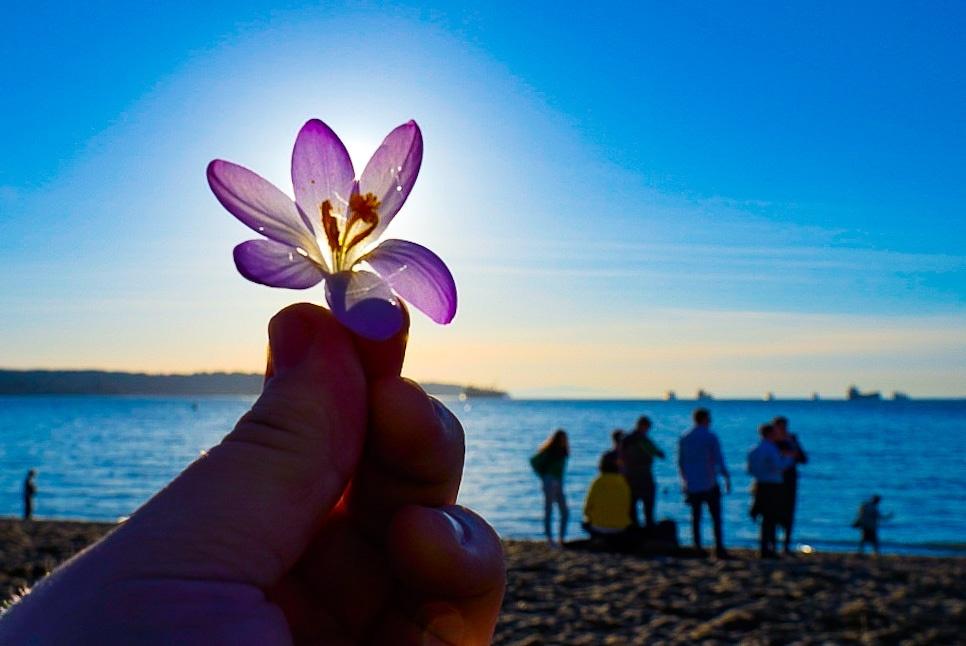 Flower sun by Taylor Hawkins