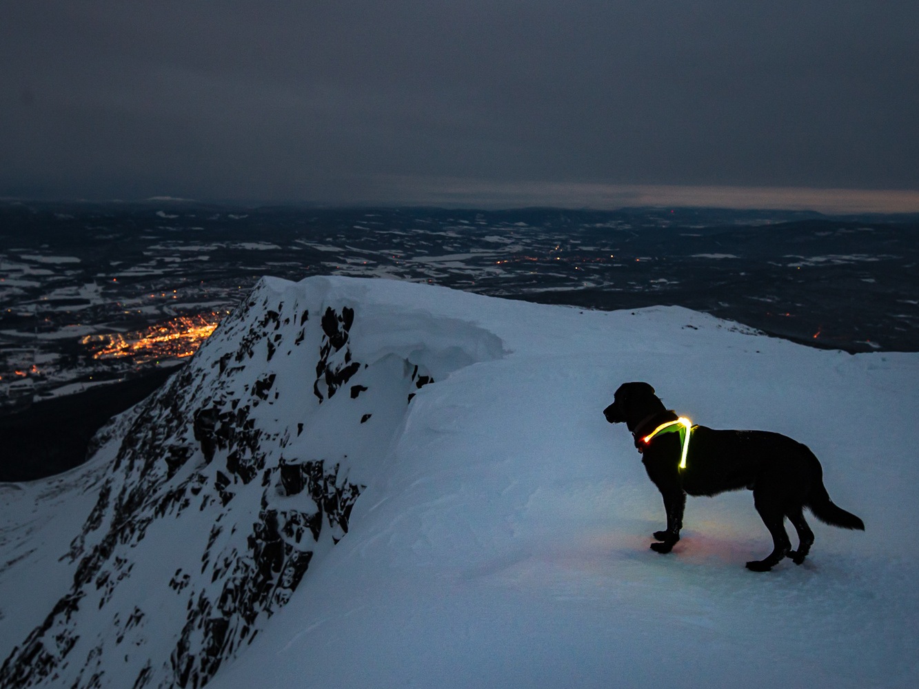 Watch Dog by Alex Christie