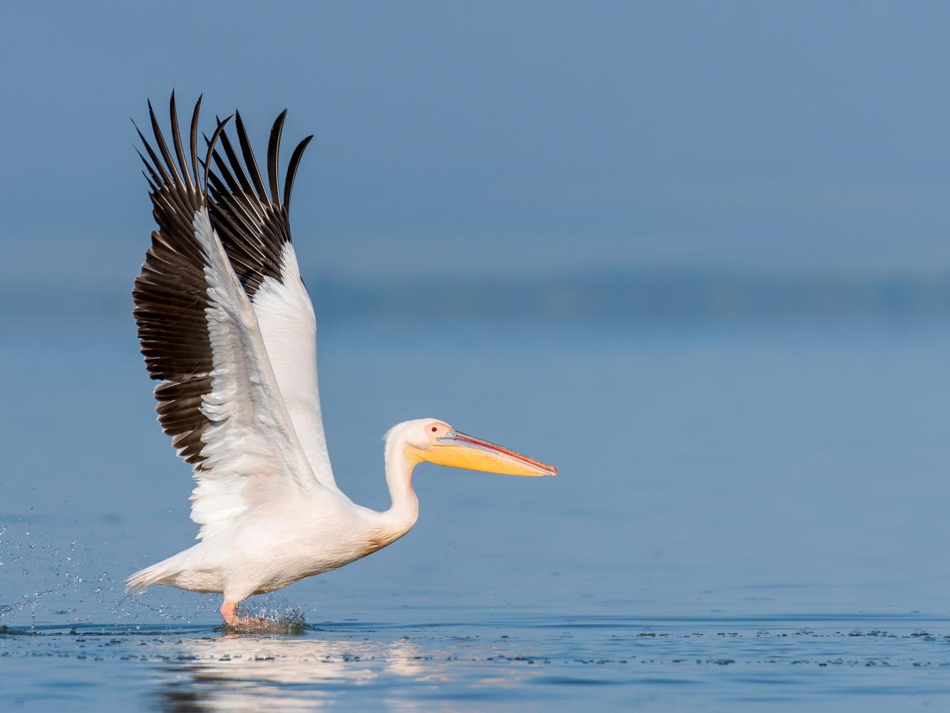 Take off... by Gabi Sandu