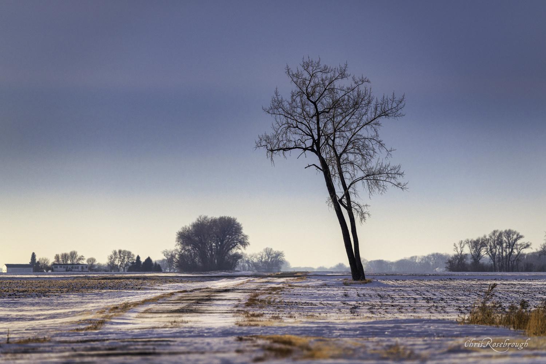 Minnesota Interpretation of the Lone Tree Composition by Chris Rosebrough