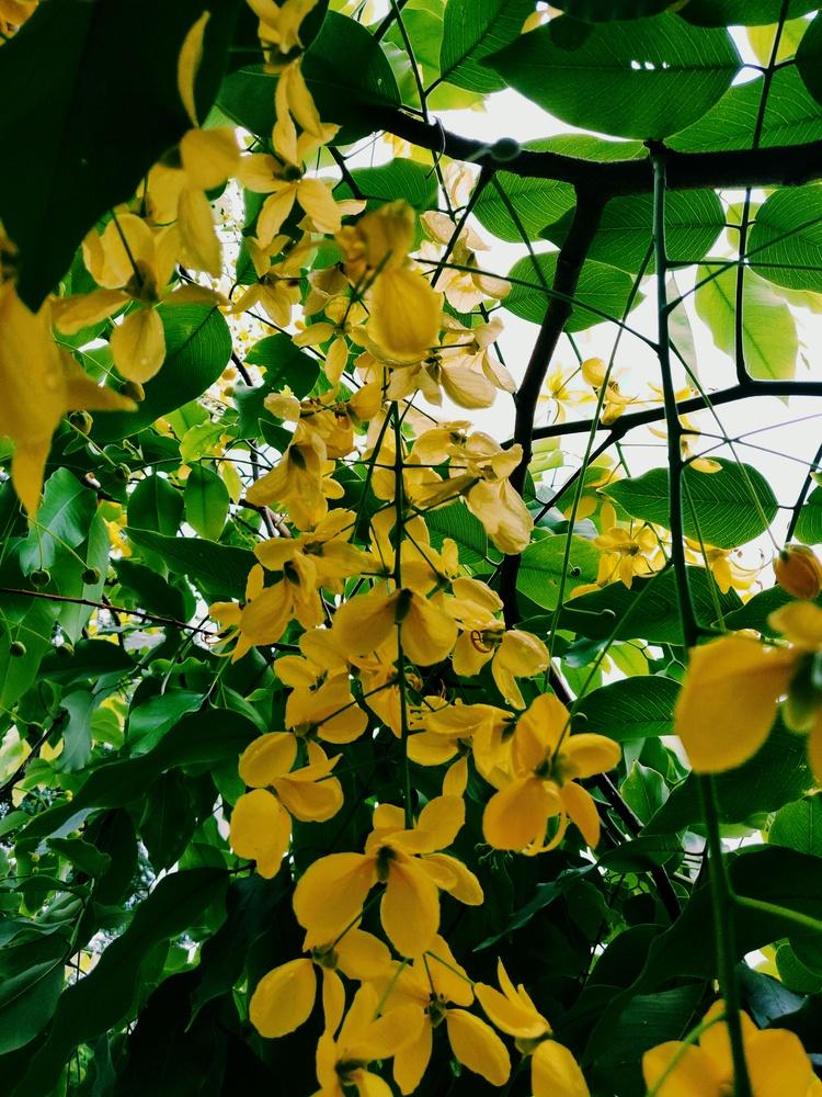 Yellow flowers by Debashish das