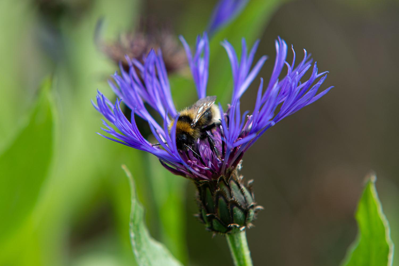 Bee positive by Johnnie Walker