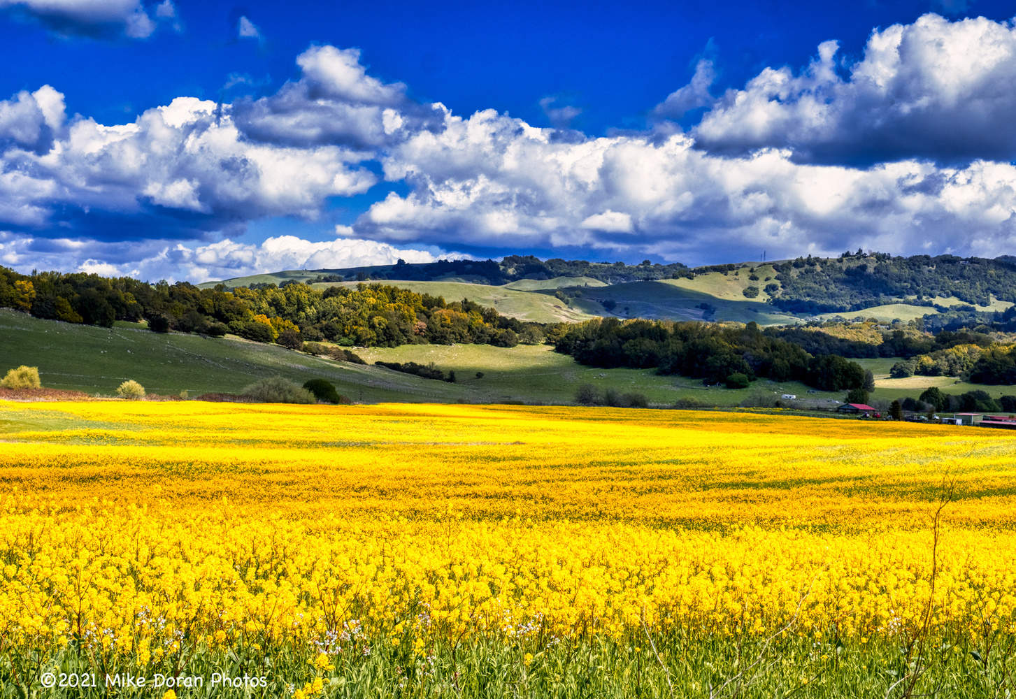 Spring in Sonoma County! by Mike Doran