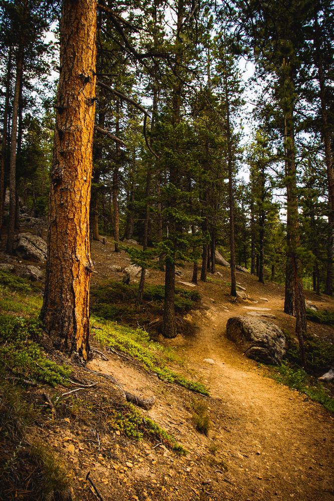 Hike 6 by Abel Getachew