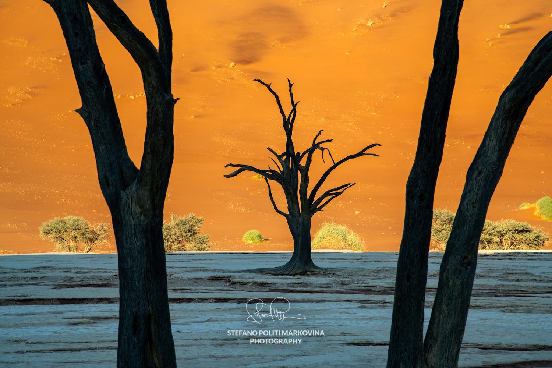 Namibian contrast by Stefano Politi Markovina