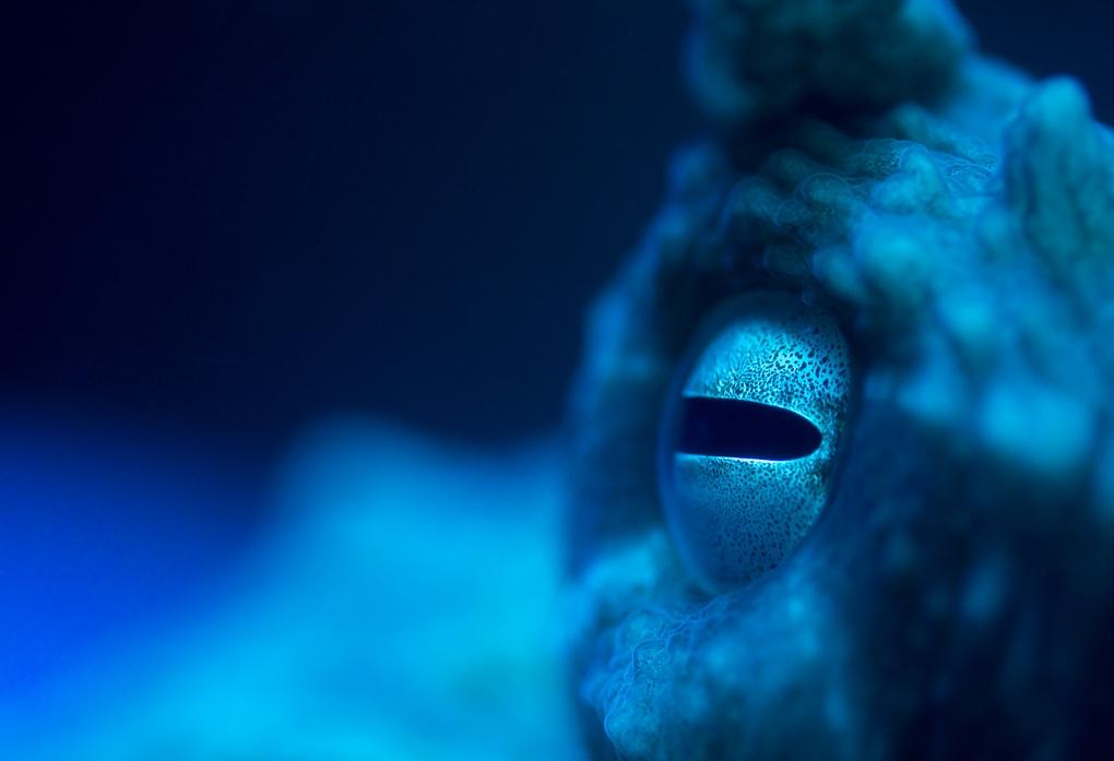 Deep Blue by pierre jamnicky