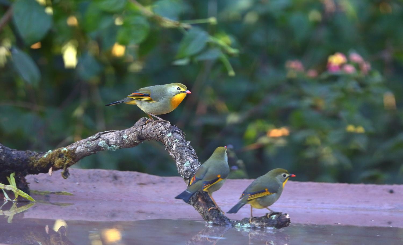 Avian Beauties by jai mohan