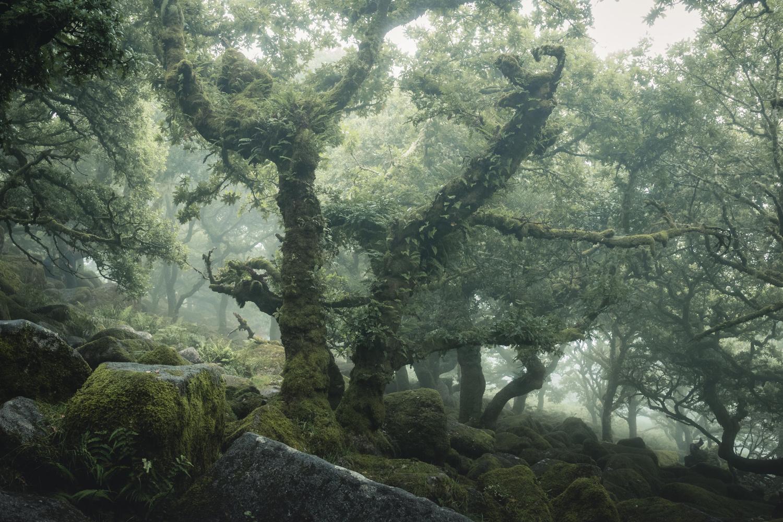 Wistmans Wood by Ryan Kerr
