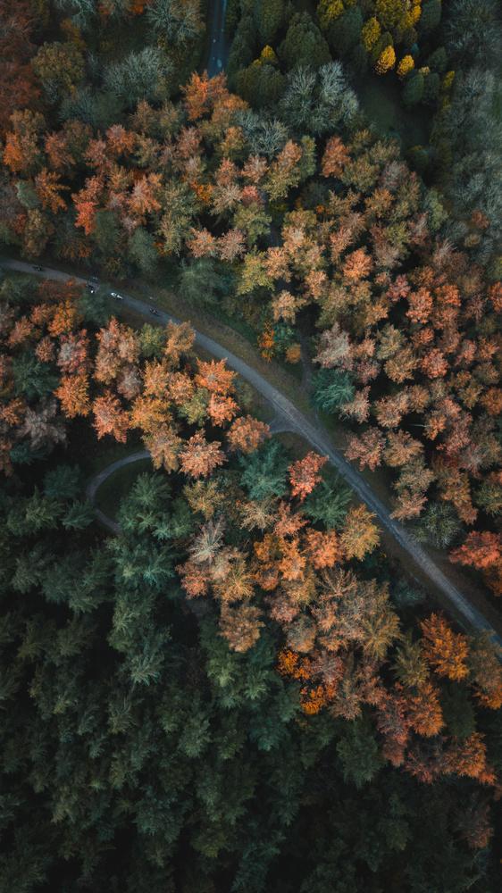 Autumn trees by Ryan Kerr