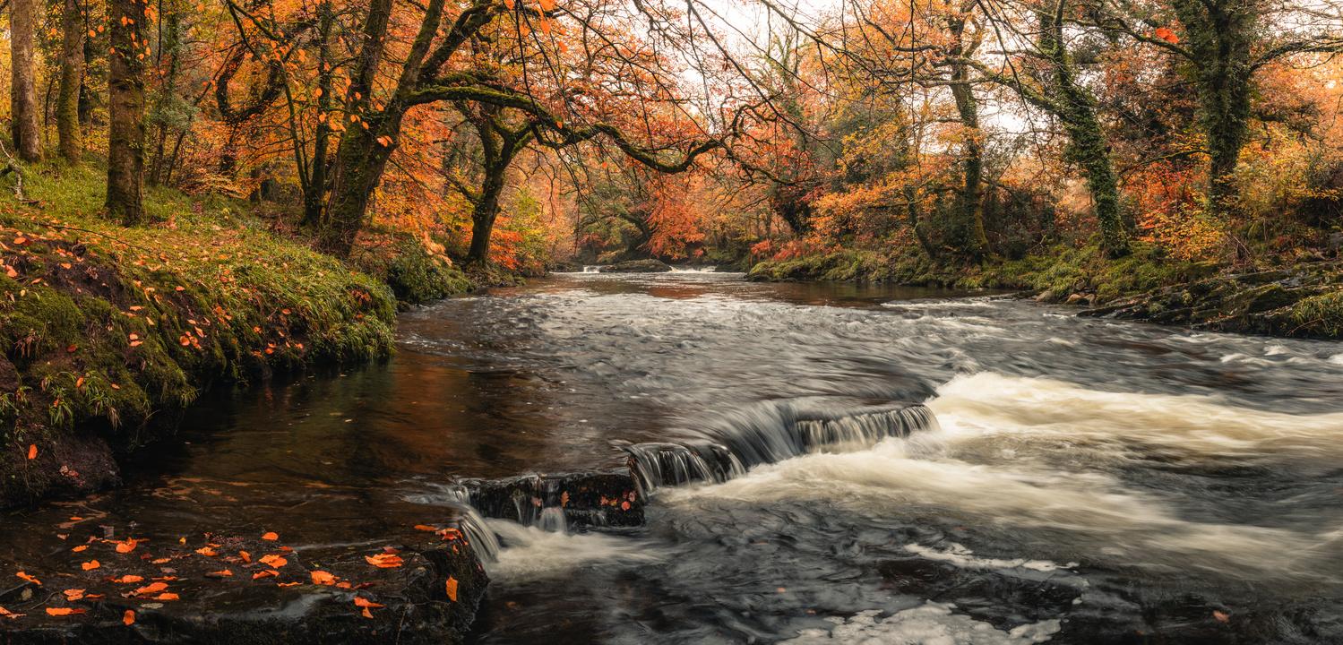 Newbridge Forest by Ryan Kerr