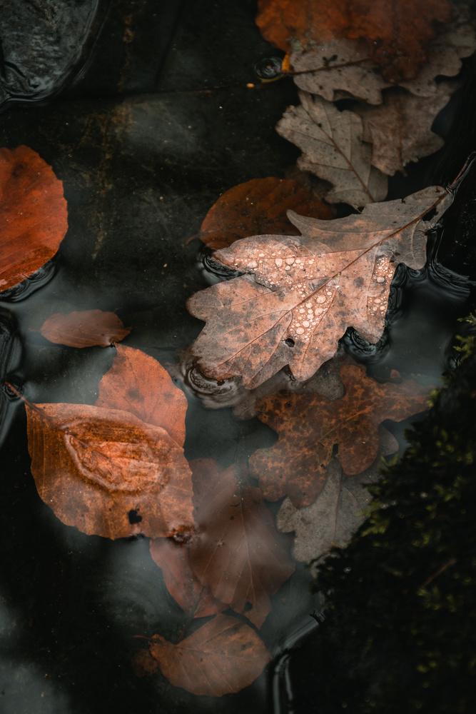 Autumn Leaves by Ryan Kerr