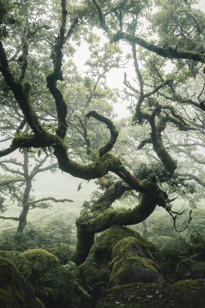 Twisted Tree by Ryan Kerr