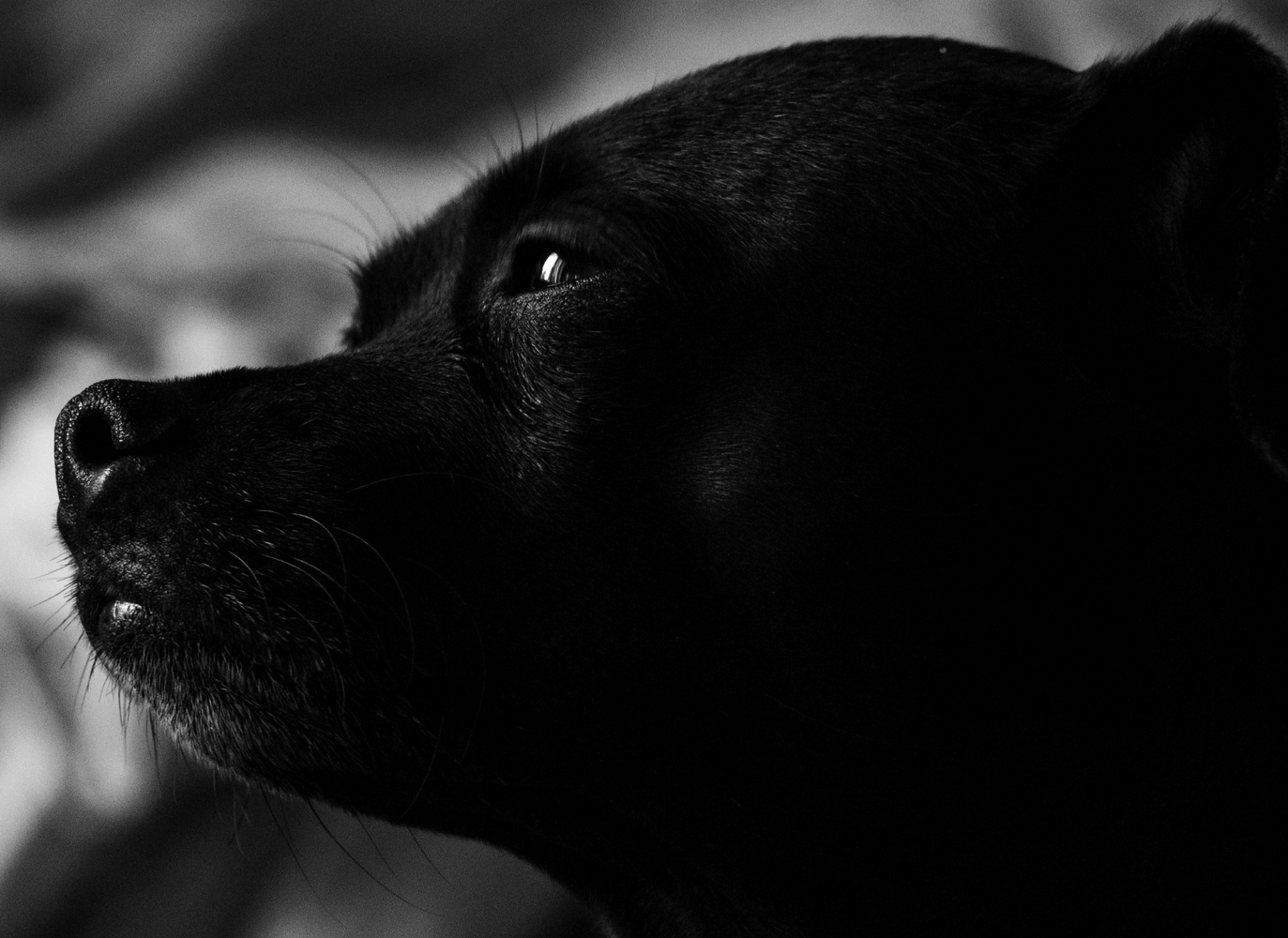 Doggy closeup by Marlon Powell