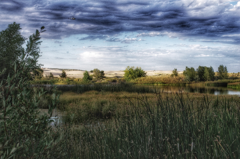 Grasslands by J.R. Taylor
