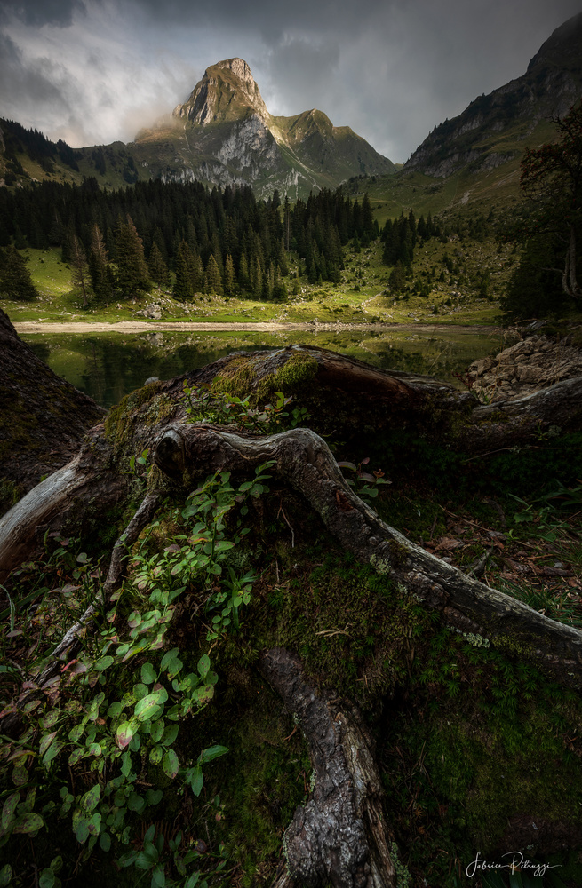 Rooted by Fabrice Petruzzi