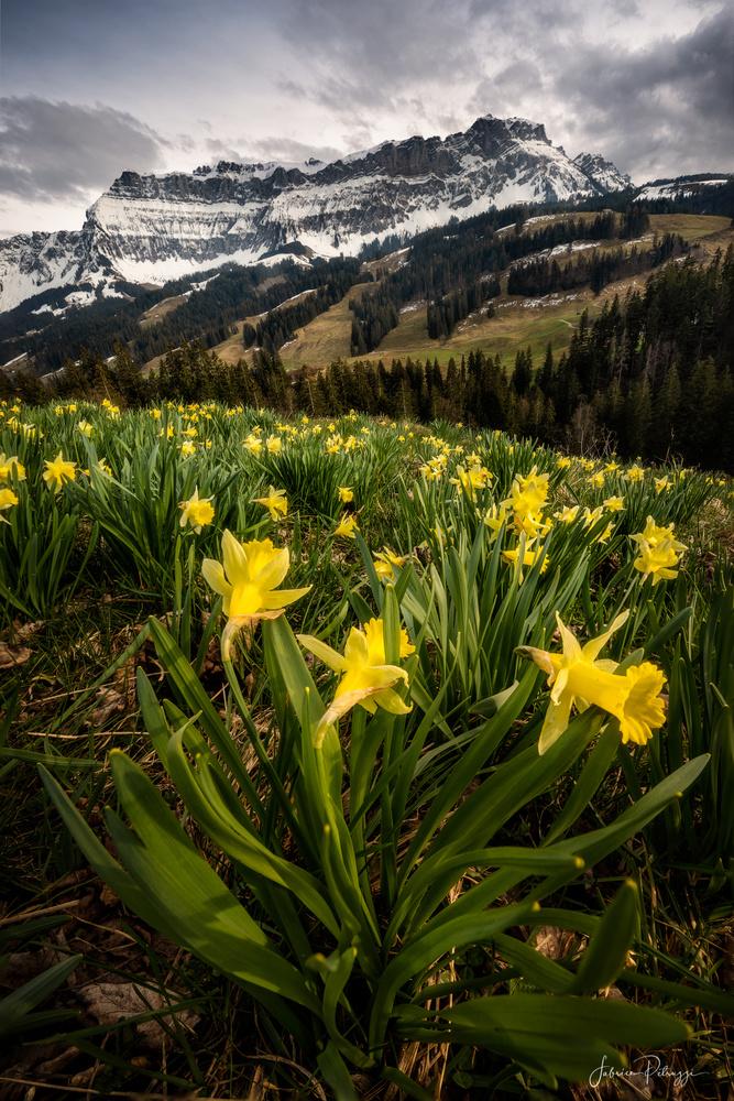 Wild Flowers by Fabrice Petruzzi