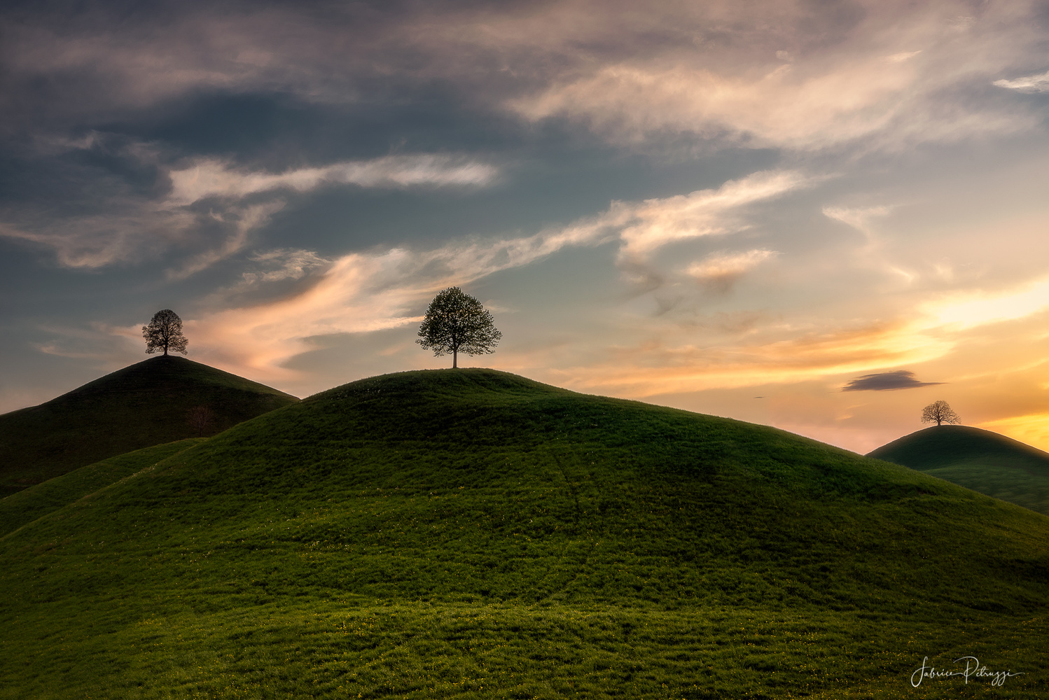 Confined Trees by Fabrice Petruzzi
