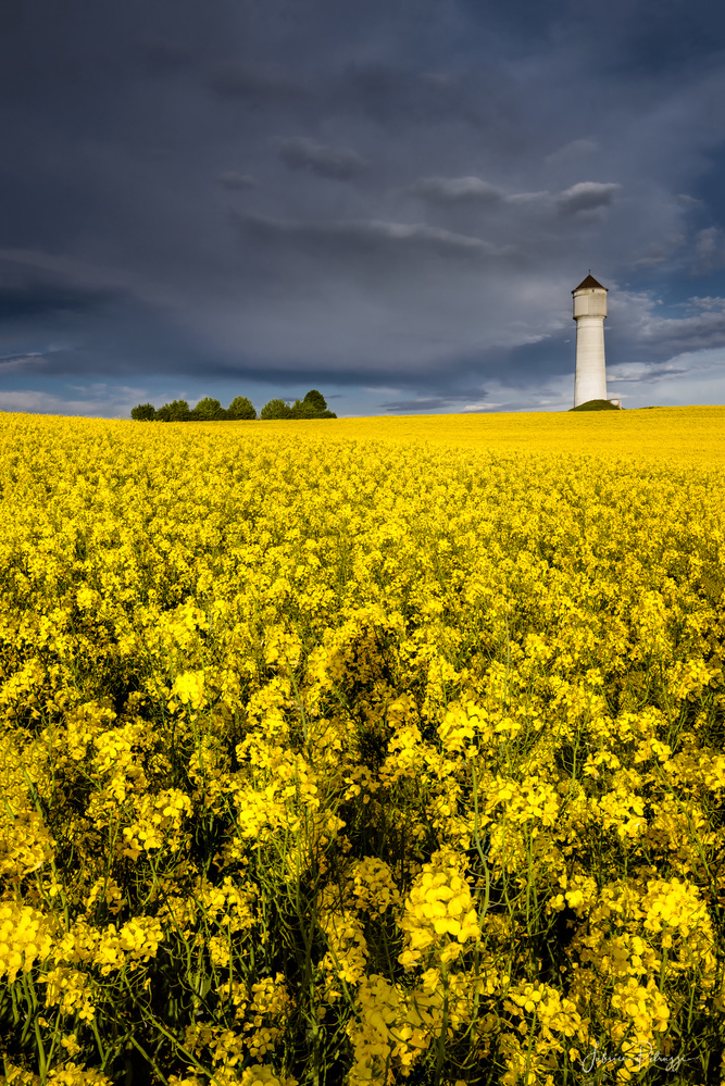 The Yellow Field by Fabrice Petruzzi