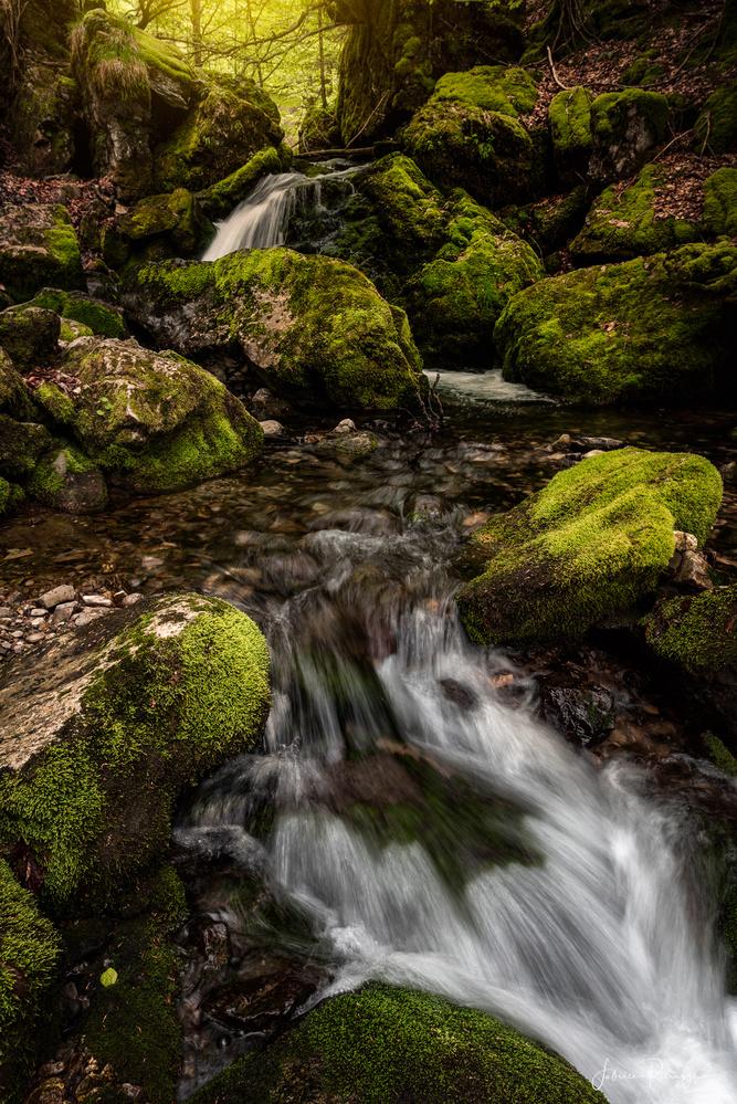 Green Flow by Fabrice Petruzzi