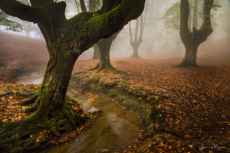 The Autumn start ! by Fabrice Petruzzi