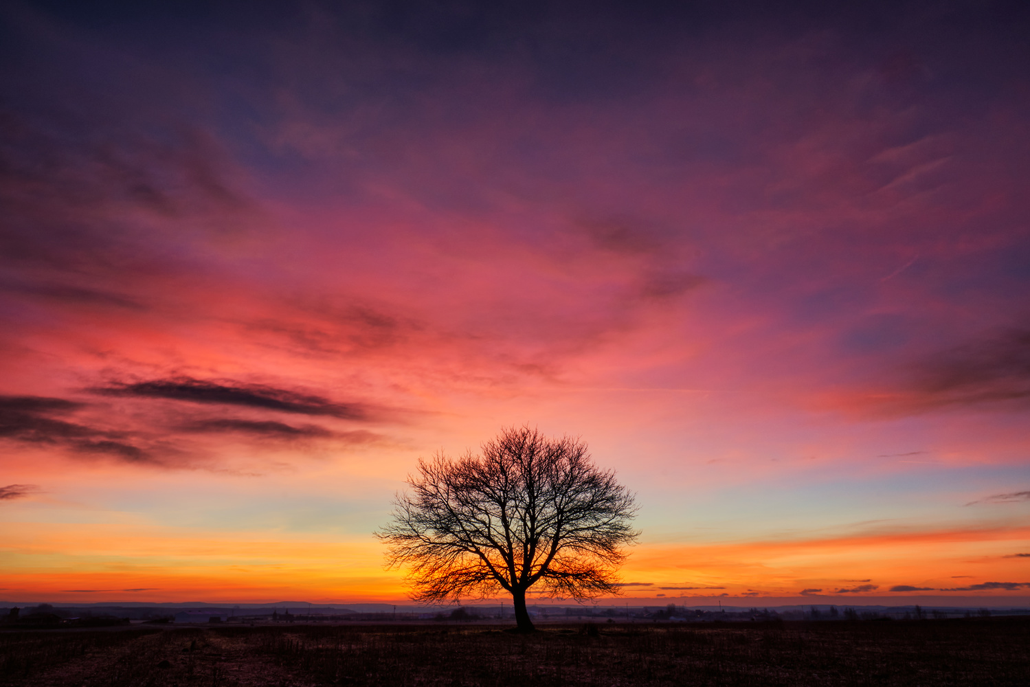 Tree at dawn by Ignacio Municio