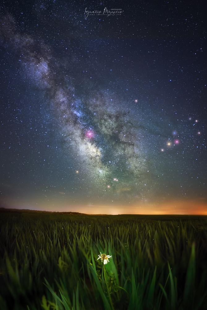 Stars by Ignacio Municio